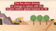 Global Assessment Animation